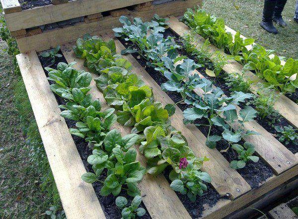 garden pallet 1